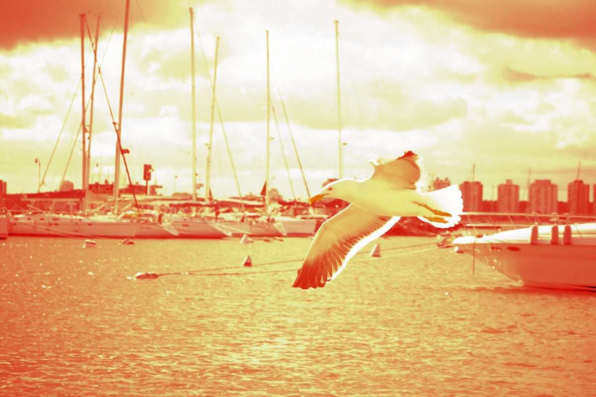 Mit frischen wind in den segeln pixelhafen design for Design artikel